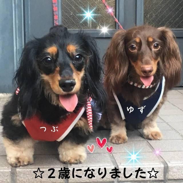 yuzu1009-1.jpg